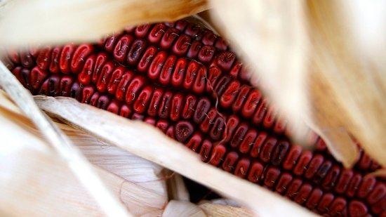 Shelbyville, KY: Jeptha Creed's Bloody Butcher Corn.