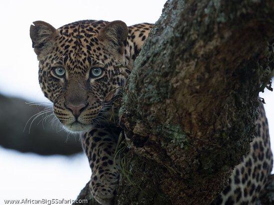 Hoedspruit, جنوب أفريقيا: Blue eyes