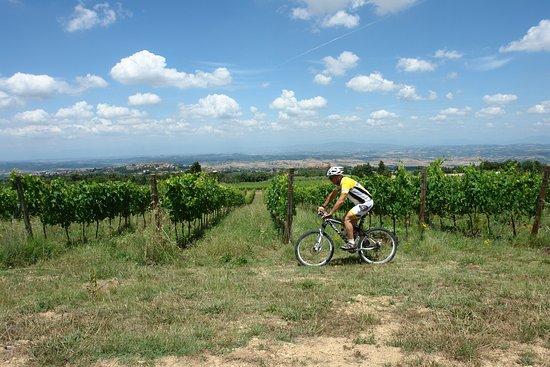 Montaione, Italia: Mtb bike tour