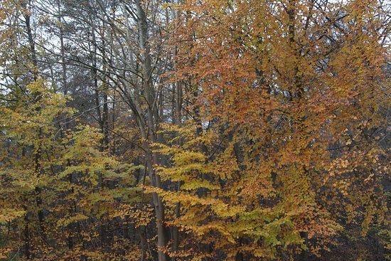 Kongens Lyngby, Dinamarca: Foliage in November