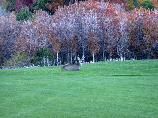 Monticello, UT: mule deer at rest