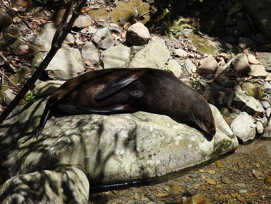 Kaikoura, Nueva Zelanda: I'm tired.