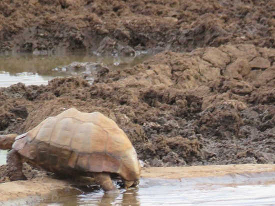 Кимберли, Южная Африка: The ancient one having had his dip