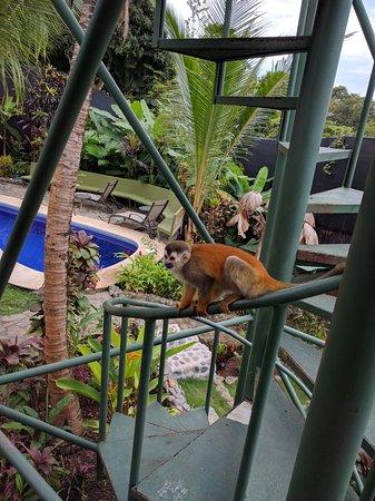 Villas Oasis張圖片