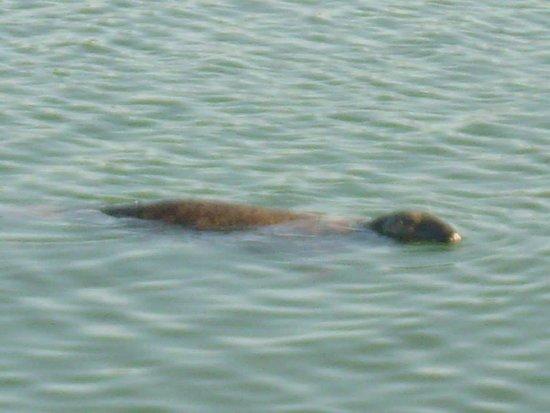 Howth, Ireland: water creature :)
