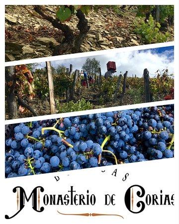 Cangas del Narcea, Spagna: Buena vendimia en viejos viñedos