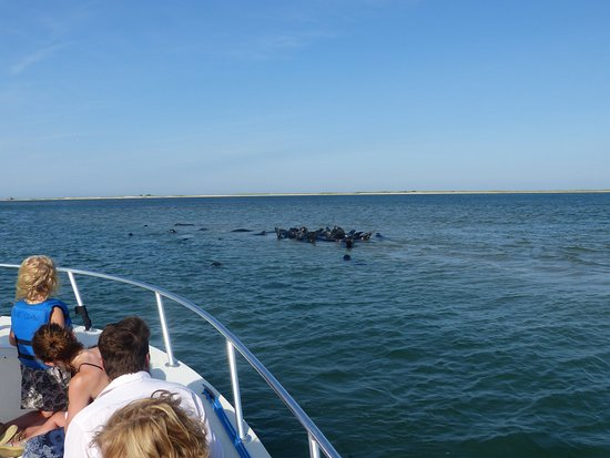 Blue Claw Boat Tours : Great day for watching seals in the harbor near Chatham