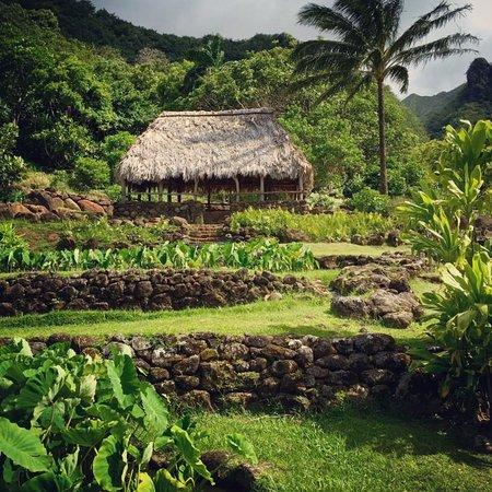 Kalalau Lookout: Lumahai, North Shore Kauai   National Tropical Botanical  Garden