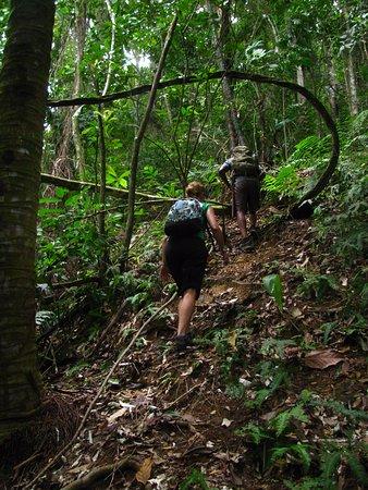 Arima, Trinidad: Climbing El Cerro del Aripo
