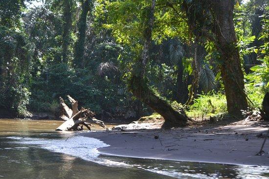 Tortuguero, كوستاريكا: Tortuguero forrest