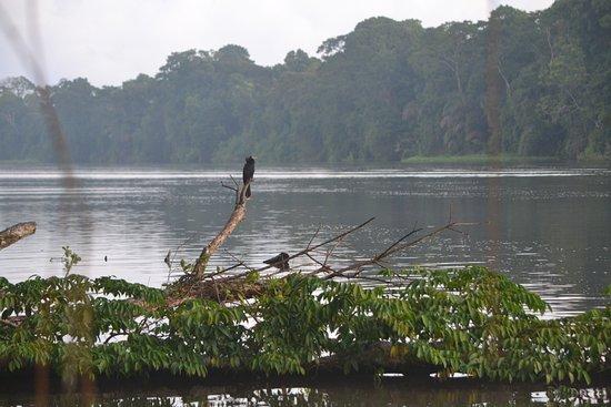 Tortuguero, كوستاريكا: Bird near our lodge