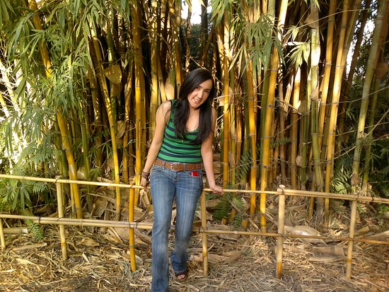 Bambu Oriental Picture Of Jardin Botanico Culiacan Culiacan - Jardin-bambu