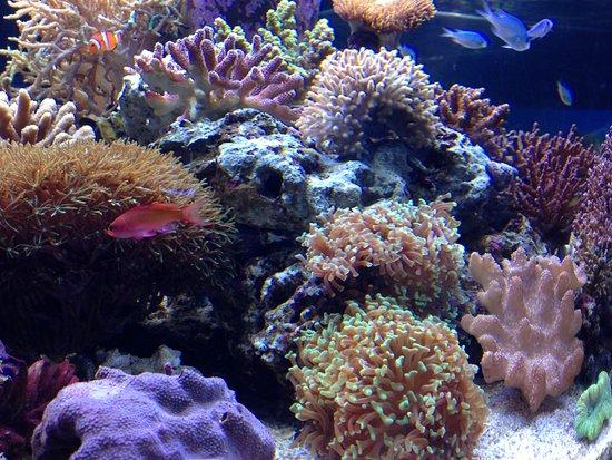 Oga Aquarium Gao : Coral reef