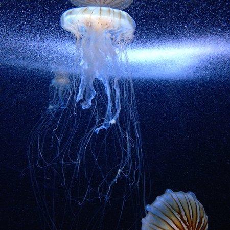 Oga Aquarium Gao : jelly fish