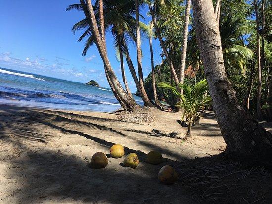 Saint Andrew Parish, Dominica: photo5.jpg