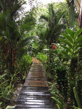 Cocles, Costa Rica: Blick in die Anlage. Man läuft auf den Stegen.
