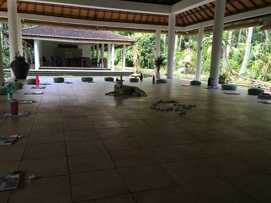 Jiwa Damai Organic Garden & Retreat: yoga shala and dining hall
