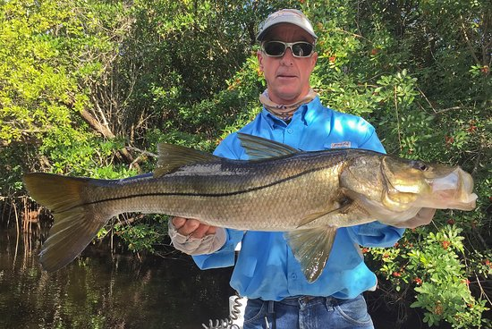 Chokoloskee, FL: Mike said there should be big snook here. Using 1/2 of a shrimp, this is what he caught.