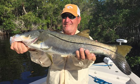 Chokoloskee, FL: Gary and I used live finger mullet. This wa the bigger of Gary's two slot snook.