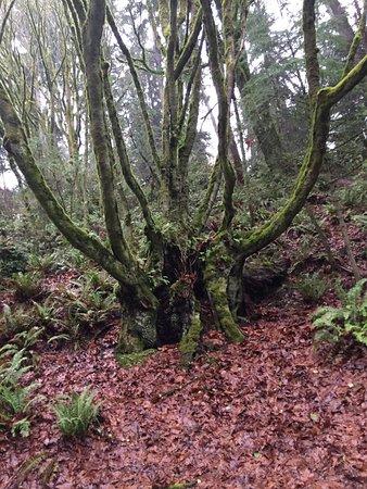 Tacoma, WA: The Whomping Willow Tree!