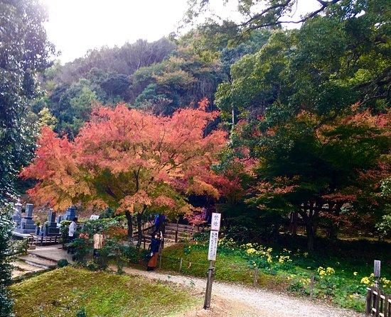 Momi-ji Temple