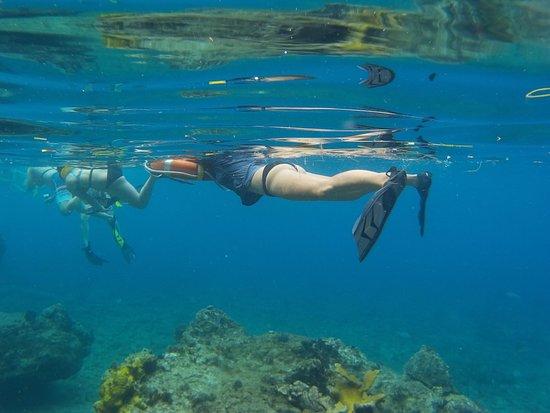 Road Town, Tortola  Adası: Snorkeling near Norman Island