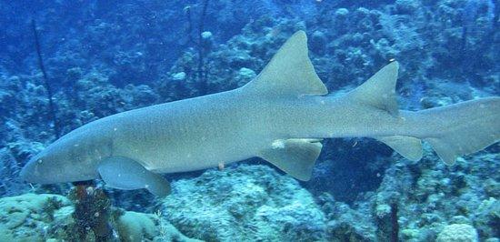 Wall to Wall Diving: Shark!