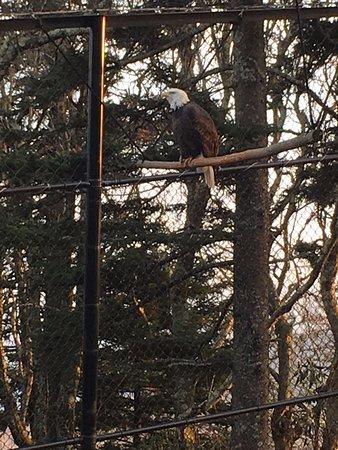animal habitat at Grandfather Mountain