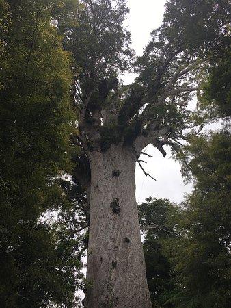 Opononi, New Zealand: photo1.jpg