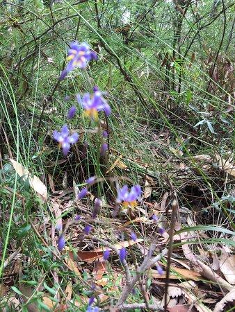 Ulladulla Wildflower Reserve