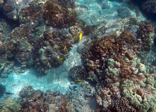 Honaunau, Hawái: Fish_02_large.jpg
