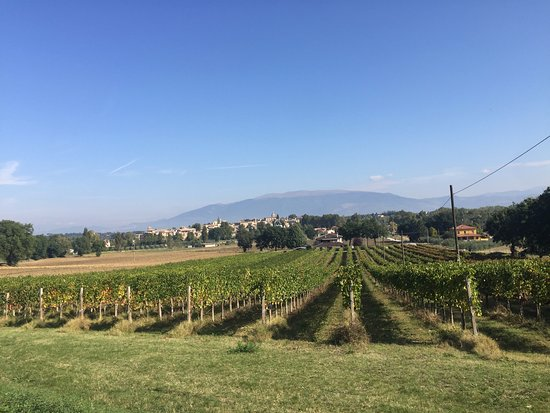 Montefalco, Italien: View from one of the vineyards.