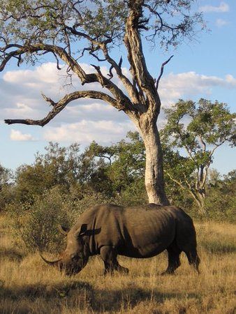Timbavati Private Nature Reserve, แอฟริกาใต้: Tanda Tula