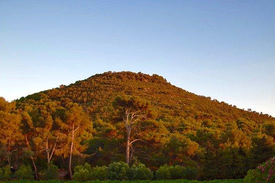 Domaine de la Navicelle: Colle Noire