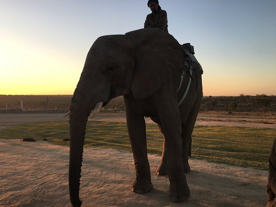 Hoedspruit, South Africa: Sunrise Elephant Back Safari