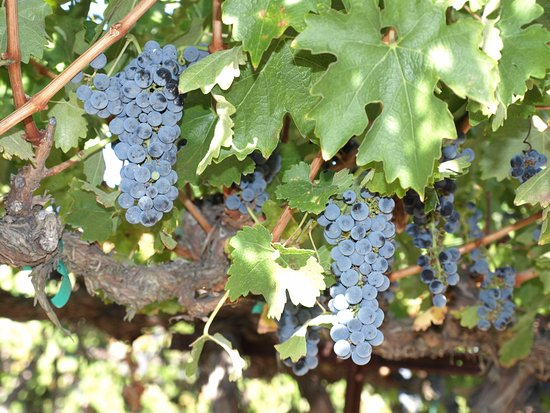 Paso Robles, Kalifornia: Ripe fruit