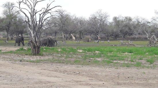 Selous Game Reserve, Tanzania: Olifanten, giraffe's, en zebra's (excuus voor de kwaliteit)