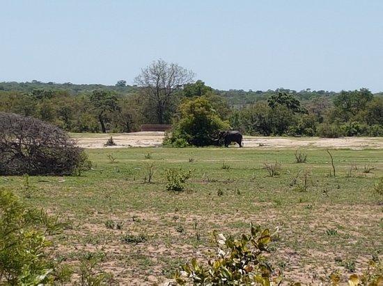 Skukuza, Sydafrika: 20161128_105924_large.jpg