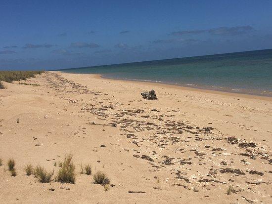 Thevenard Island Photo