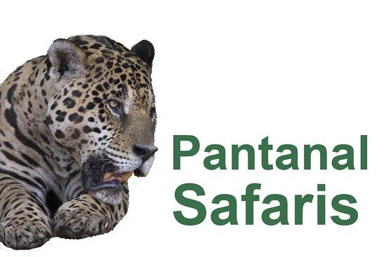 Poconé, MT: Pantanal Safaris