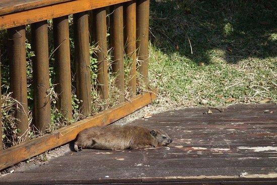 Tsitsikamma National Park, Sudáfrica: animali