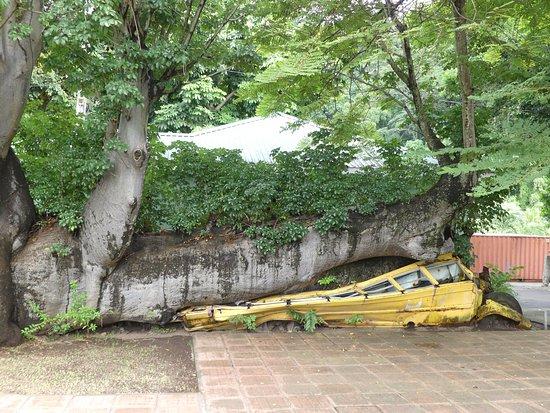 Roseau, Dominica: zerquetschter Bus im Botanischen Garten