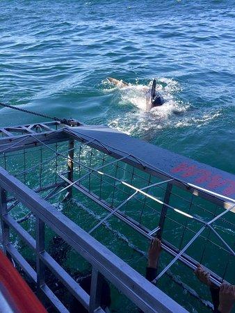 Kleinbaai, África do Sul: squalo