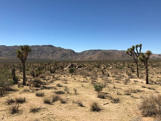 Twentynine Palms, CA: vista do deserto
