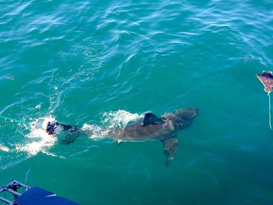 Kleinbaai, África do Sul: squalo4