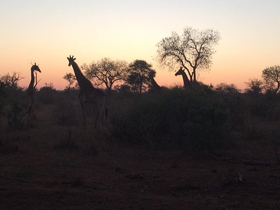 Timbavati Private Nature Reserve, Afrika Selatan: Shindzela Tented Safari Camp