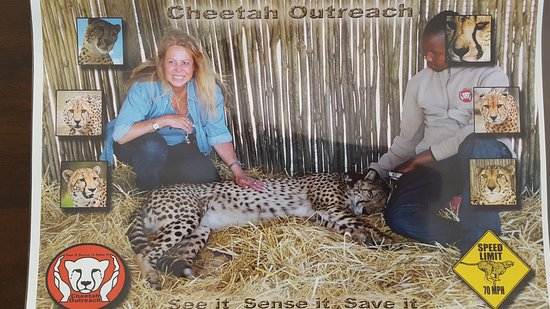 Western Cape, South Africa: Cheetah Outreach in Sommerset West sehr zu empfehlen