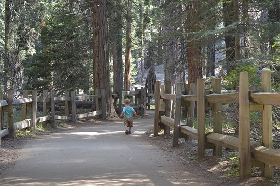 Princess Campground: Our little guy exploring Grant Grove