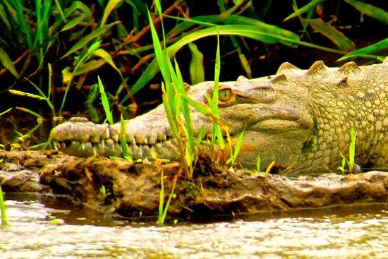Herradura, Costa Rica: Crocodile Tour