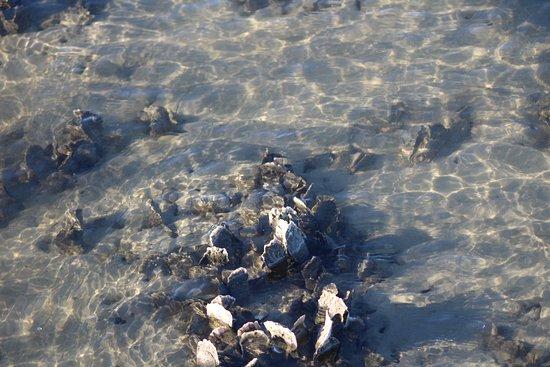 Murrells Inlet, Carolina del Sur: oysters!!